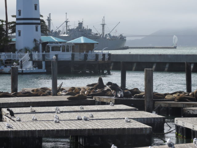 The view from Pier 39. One of the sea lions seems to be rising to the occasion. The rest are happily dead to the world. San Francisco, United States, North America.