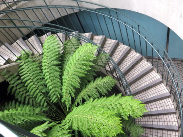 Fern and curves at the Embarcadero Center. San Francisco, United States, North America.