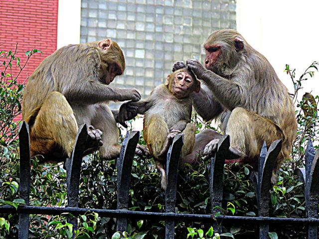 Darlings of Delhi. India, Asia.