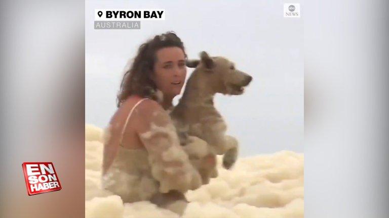 Avustralya'da deniz köpüklerinin içinde kalan köpek kurtarıldı