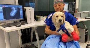 Bacakları kesilen Pamuk'a protez takılacak: 'Normal bir köpek gibi hayatını sürdürmesi mümkün değil'