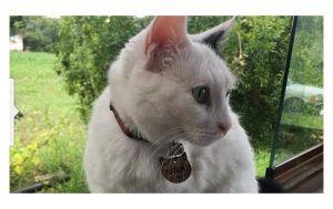 Engelli kediyi silahla öldürdüler: 'Kimseye zararı olmayan 3 bacaklı kedimizi kim niye öldürür?'