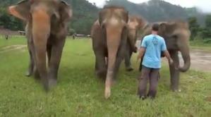 Fillerin, Kendilerini Kurtaran Bakıcının Sesini Duyduklarında Verdikleri Tepki Gözlerinizden Kalpler Fışkırtacak