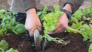 Pandemide hobi bahçelere ilgi, tarım araçlarına talebi artırdı