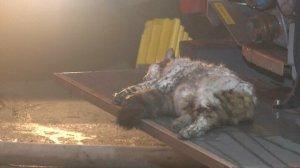 Şişli'de kumaş deposunda yangın çıktı, mahalleli sokağa döküldü