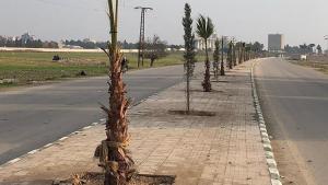 Türkiye, Tel Abyad'da 75 bin fidanı toprakla buluşturdu
