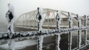 Ardahan buz tuttu: Domuz sürüsü yiyecek için köye indi