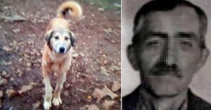 Bir Canın Bedeli Bin 33 Lira! Günde 5 Ekmek Yediği Gerekçesiyle Köpeğini Öldüren Adama Bin 33 Lira Ceza