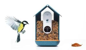 Bird Buddy: Akıllı kuş yemliği geliştirildi