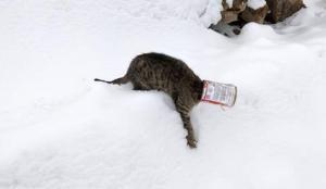 Bitlis'te kafası teneke kutusuna sıkışan kedi kurtarıldı