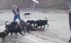 Denzili'de Tepki Çeken Görüntü! Yaraladıkları Yavru Domuzu, Köpeklere Parçalattılar
