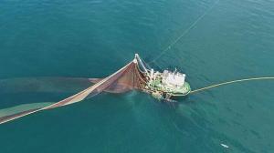 Karadeniz'de hamsi avına kota önerisi: 1 yıl yasaklansın