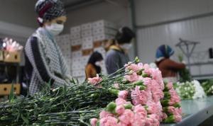 Antalya'nın 2021 yılı çiçek ihracatı hedefi 60 milyon dolar