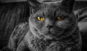 Araştırma: Karantina nedeniyle kediler insanlardan bıktı