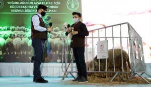 Bakan Pakdemirli, sosyal medyada ünlenen küçük çoban Şevki'ye köpek ve koyun hediye etti
