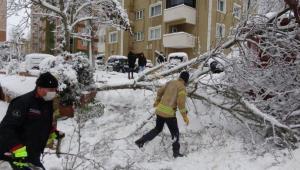 İstanbul'da Kar Yağışının Bilançosu: Fırtınada 517 Ağaç ve Direk Devrildi