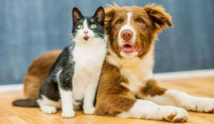 Kedilere ve köpeklere karantina kararı