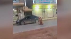 Libya'da cadde ortasında başıboş gezen bir aslan görenleri şaşkına çevirdi