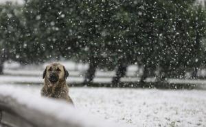 Yoğun Kar ve Çok Kuvvetli Yağmur… 15 Kente Turuncu Uyarı!