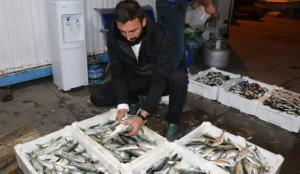 Zonguldak'ta balıkçılar limana 2 bin kasa balıkla döndü