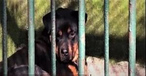 Çin Yine Bir Garip: Hayvanat Bahçesi, Ziyaretçilerine Kurt Diye Köpek Yutturmaya Kalktı