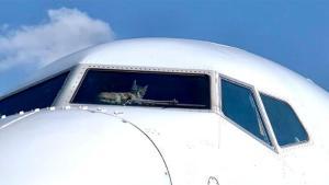 Kokpite Girip Pilotlara Saldıran Kedi, Uçağa Acil İniş Yaptırdı