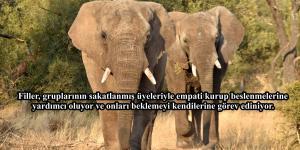 Okuduktan Sonra Bir Daha Kendinizi Hayvanlardan Üstün Görmenizi İmkansız Hale Getirecek Bilgiler