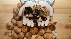 Pandemide büyük rağbet gördü: Şifa deposu siyah sarımsak tane ile satılıyor