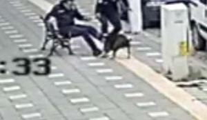 Pitbull dehşeti: 2 polis yaralandı