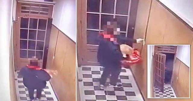 'Restorandaki Fareleri Kovmak İçin' Sipariş Teslim Etmeye Gittiği Apartmandaki Kediyi Çalan Pizza Kuryesi