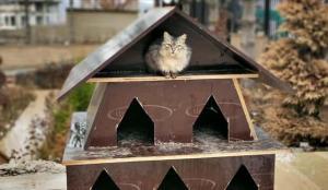 TOKİ inşaatlarının atık malzemeleri sokak hayvanları için sıcak yuvaya dönüşüyor