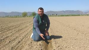 Aydın'da pamuk yerine ayçiçeği üretimine yönelim oluştu