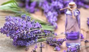 Lavanta çayı ne işe yarar? Lavanta yağı faydaları…