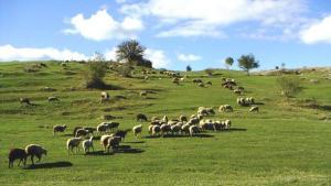 Mera, Yaylak ve Otlalar Turizme Açılıyor: Tek Şart Ot Parasının Ödenmesi
