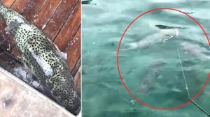 Son dakika… Antalya'da balon balığı sürüsü görüntülendi! Tedirgin eden anlar…