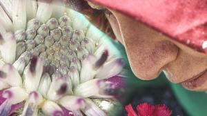 Dünya'da sadece Gölbaşı'nda yetişiyor! Sevgi Çiçeği'ne özel koruma