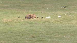 Göçmen kuşların Afrika-Kafkasya yolculuğunun mola noktası: Erzurum Ovası