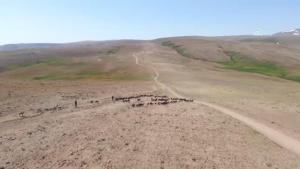 Doğu Anadolu'daki yayla yolculuğu sıcak hava nedeniyle zorlu geçiyor