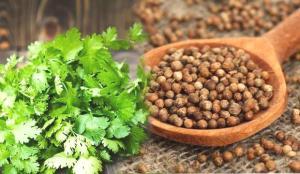 Kişniş otu faydaları nelerdir? Kişniş tohumu çayı nasıl hazırlanır?