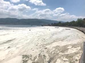 Marmara Can Çekişiyor: Deniz Salyası Kabusundan Nasıl Kurtuluruz?