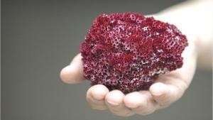 Şifa değil zehir saçıyor: Kardeş kanı bitkisi nedir, zararları nelerdir?