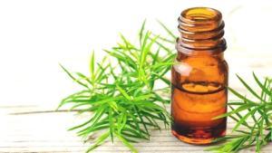 Bir damlası bile etkili: Çay ağacı yağının 7 mucizevi faydası