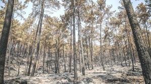 Gündemde 3 yöntem var! Yanan ormanlar için karar verildi