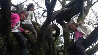 Climbing crabapple