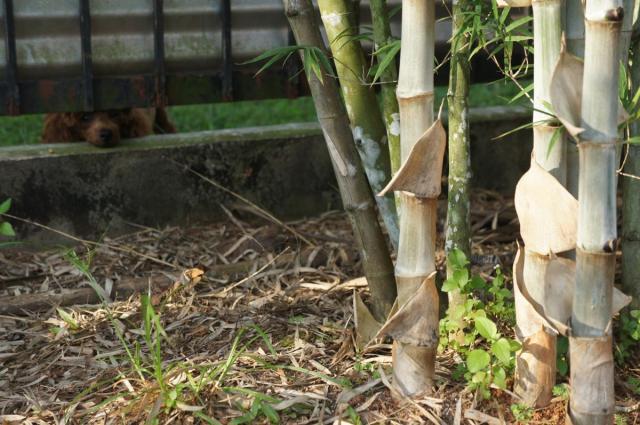 Plant some buluh