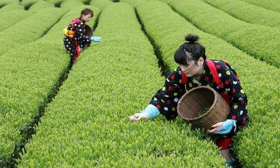 Witte thee zetten