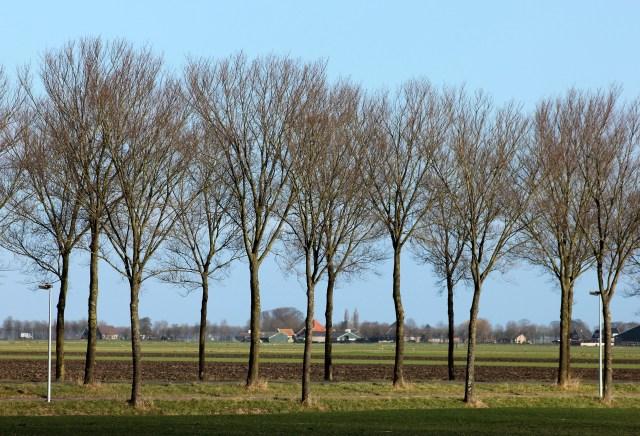 Beemster in Beeld - Bomen langs Rijperweg vanaf Jisperweg