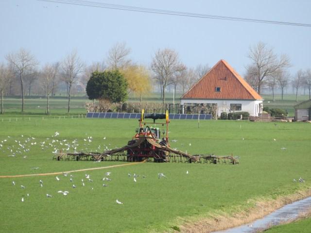 Beemster in Beeld - Grasseizoen is begonnen