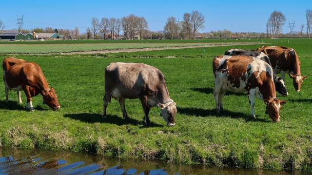 Beemster in Beeld - Jisperweg tussen Zuiderweg en Zuiddijk