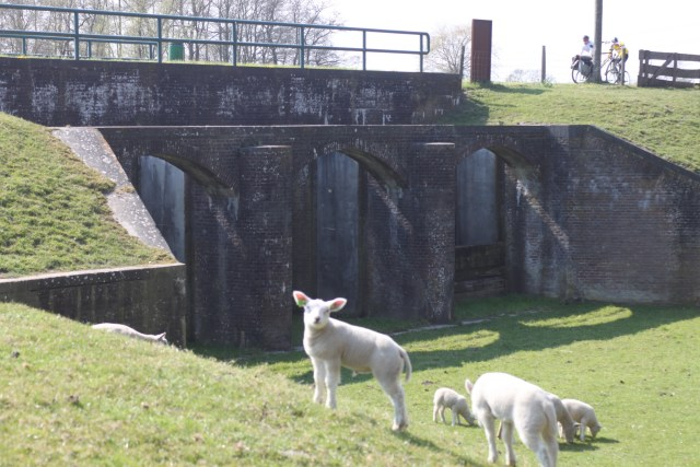 Beemster in Beeld - Fort en lammetjes